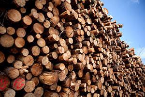 Holz ist ein natürliches Material